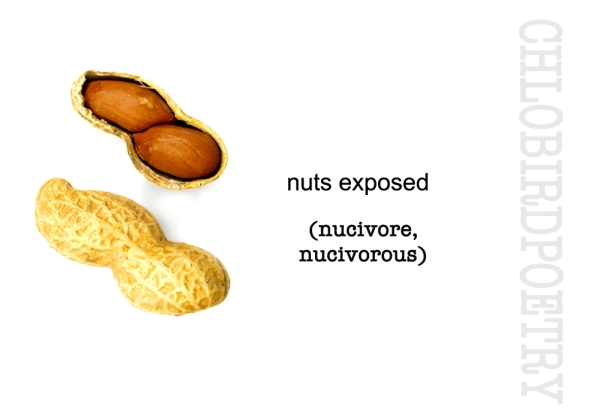 nuts exposed