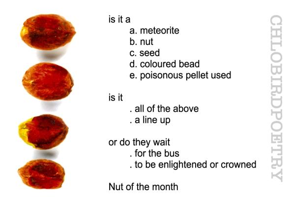 red pistachios