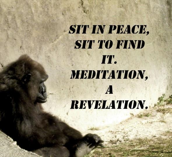 gorilla meditation