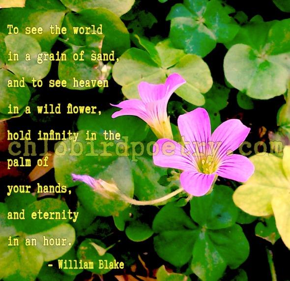 blake flower