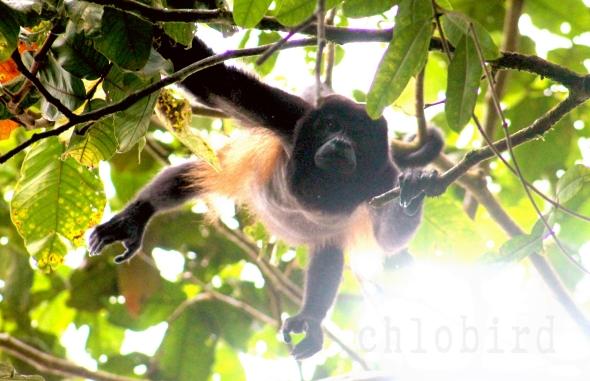 monkeyhangin